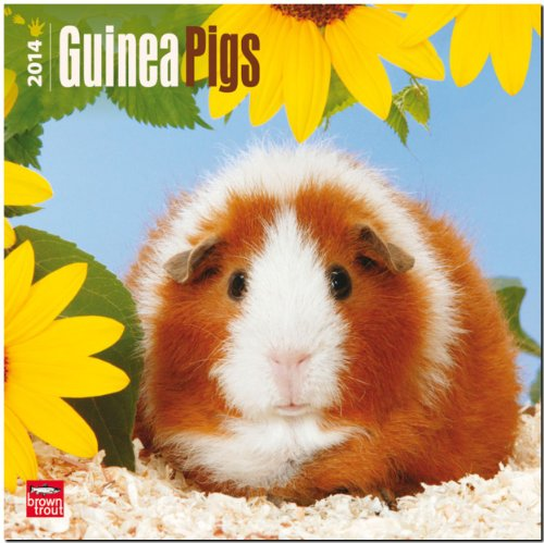 Guinea Pigs 2014 Wall Calendar By Created by Browntrout Publishers