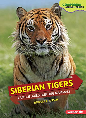 Siberian Tigers By Rebecca Hirsch