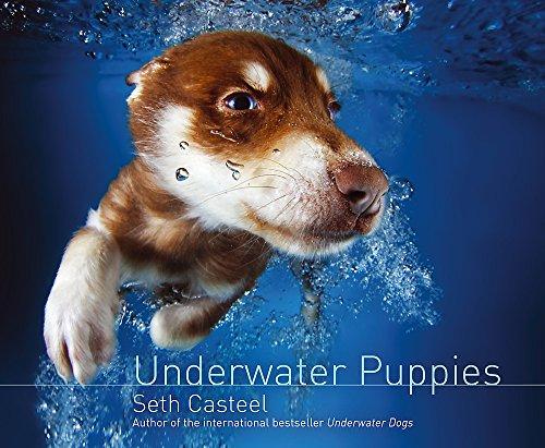 Underwater Puppies By Seth Casteel