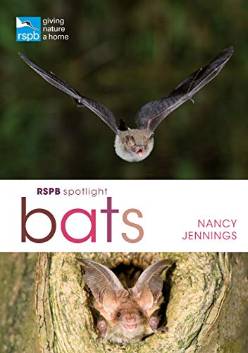 RSPB Spotlight Bats By Nancy Jennings