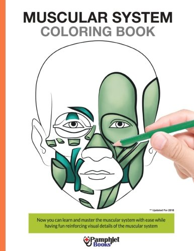 Muscular System Coloring Book By Pamphlet Books