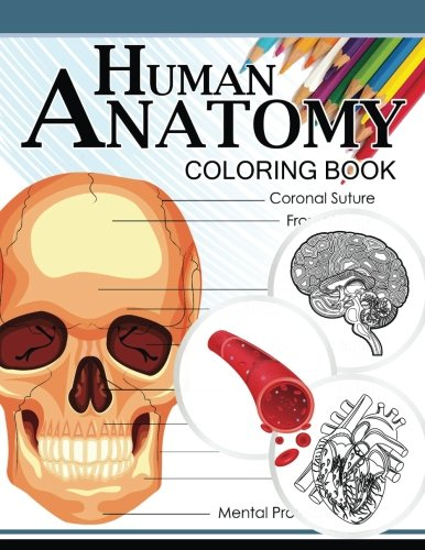 Human Anatomy Coloring Book By Dr Michael D Clark