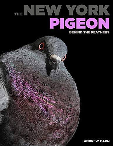The New York Pigeon By Rita McMahon