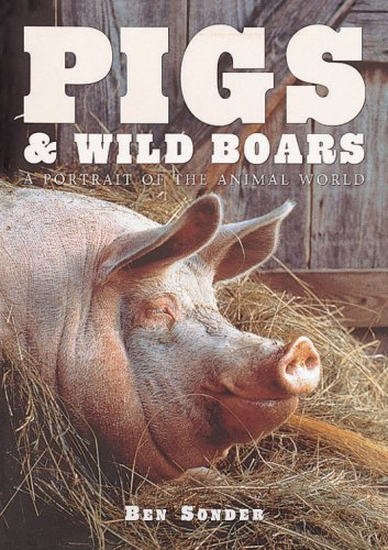 Pigs and Wild Boars By Paul Sterry