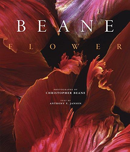 Flower: Christopher Beane By Christopher Beane