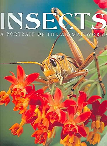 Insects By Paul Sterry