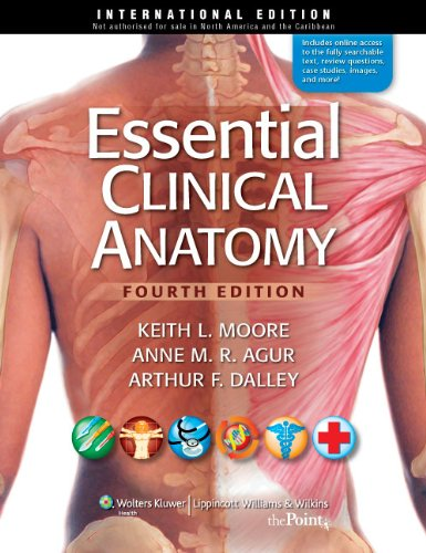 Essential Clinical Anatomy, International Edition By Keith L. Moore