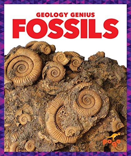 Fossils By Rebecca Pettiford
