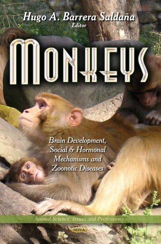 Monkeys By Hugo A. Saldana