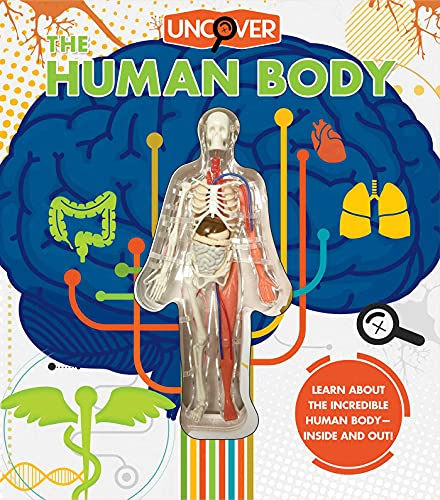 Uncover the Human Body By Luann Colombo