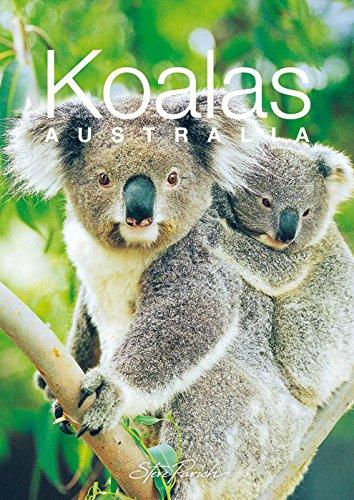 Discovering Australian Koalas Gift Book By Steve Parish