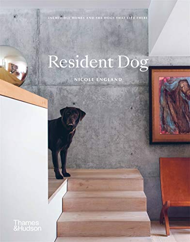 Resident Dog By Nicole England
