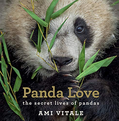 Panda Love By Ami Vitale