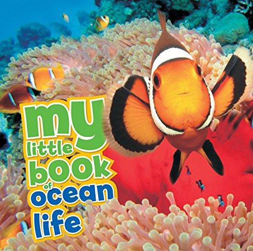 My Little Book of Ocean Life By Camilla de le Bedoyere