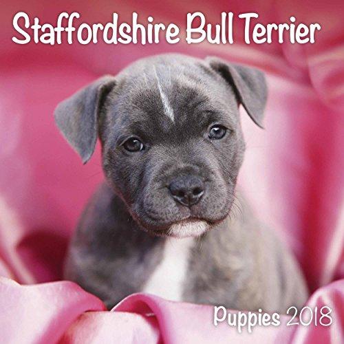 63+ Bull Terrier Puppies