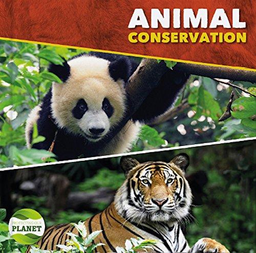 Animal Conservation By Harriet Brundle