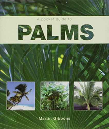 Palms by Martin Gibbons