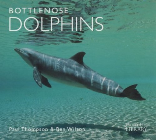 Bottlenose Dolphins By Paul Thompson