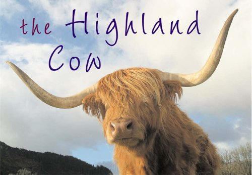 The Highland Cow By Kenny Taylor