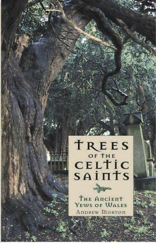 Trees of the Celtic Saints   The Ancient Yews of Wales By Andrew Morton