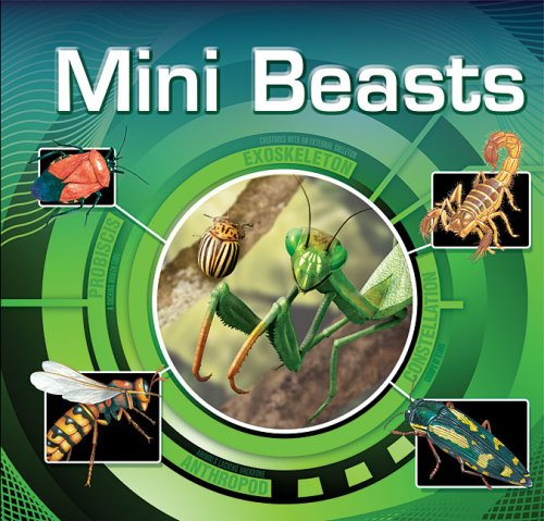 Mini Beasts By Assorted