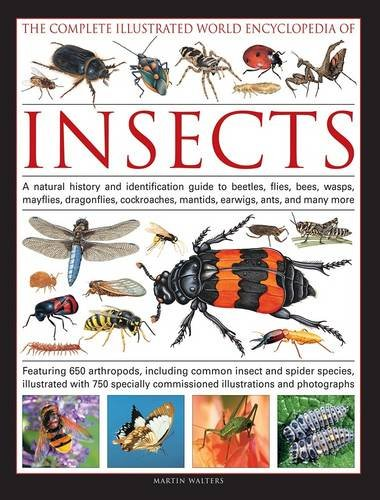Complete Illustrated World Encyclopedia of Insects by Martin Walters