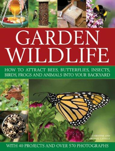 Garden Wildlife By Christine Lavelle