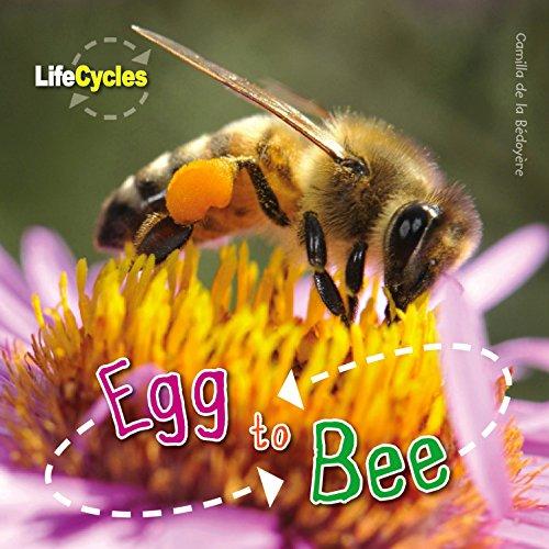 Egg to Bee By Camilla de le Bedoyere