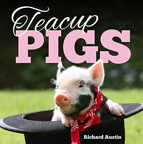Teacup Pigs By Richard Austin