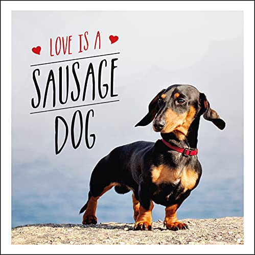 Love is a Sausage Dog (Gift Book) By Charlie Ellis
