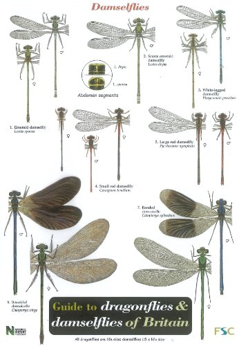 Guide to the Dragonflies and Damselflies of Britain By Steve Brooks