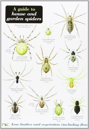 A Guide to House and Garden Spiders by Richard Lewington