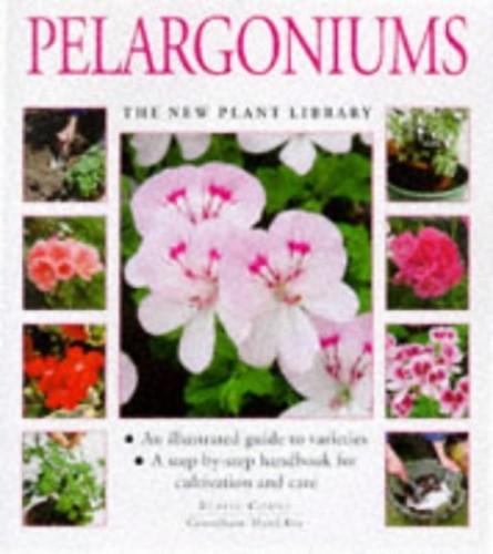 Pelargoniums By Blaise Cooke