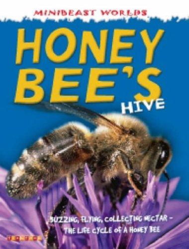 Honey Bee's Hive By Clint Twist