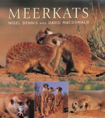 Meerkats By David Macdonald