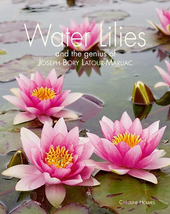 Water Lilies By Caroline Holmes