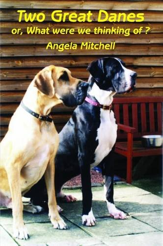 Two Great Danes By Angela Mitchell