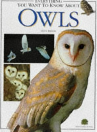 Everything You Want to Know About Owls By Dilys Breese