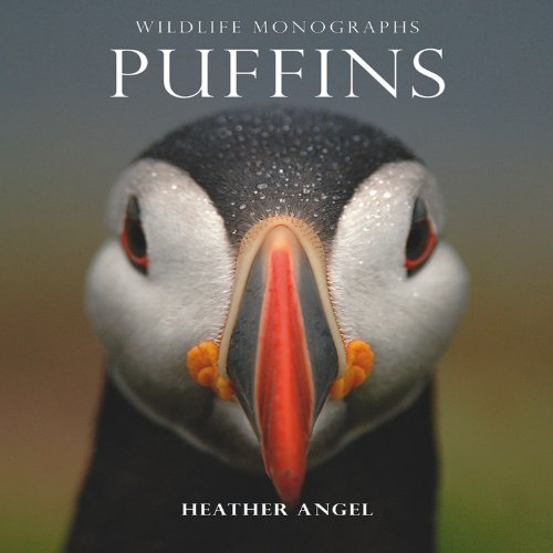 Puffins By Heather Angel