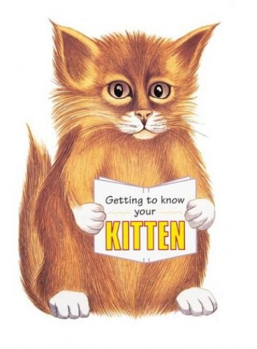 Getting To Know Your Kitten By Gill Page