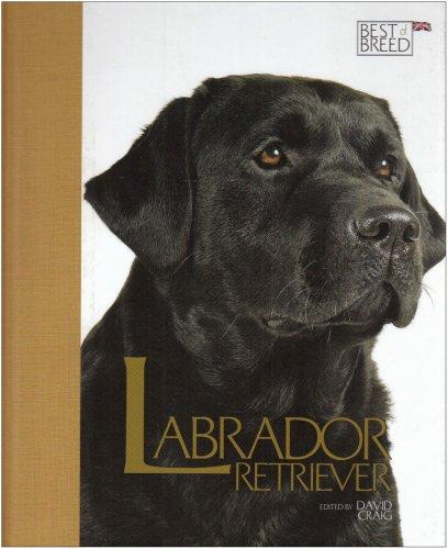 Labrador Retriever By David Craig