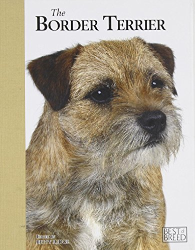 Border Terrier by Betty Judge