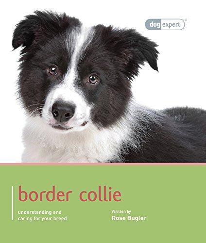 Border Collie- Dog Expert By Rose Bugler