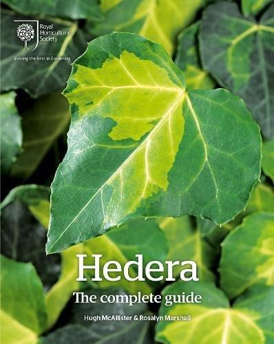Hedera By Hugh McAllister