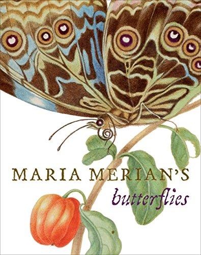 Maria Merian's Butterflies By Kate Heard