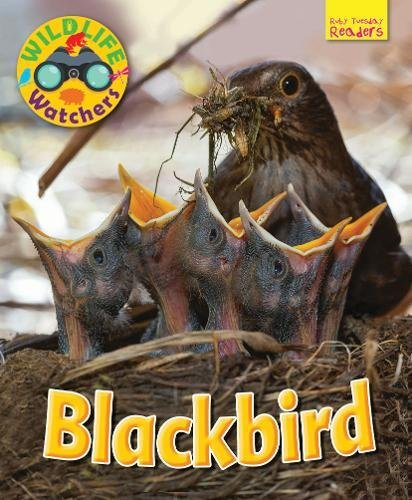Wildlife Watchers: Blackbird By Ruth Owen