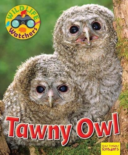 Wildlife Watchers: Tawny Owl By Ruth Owen