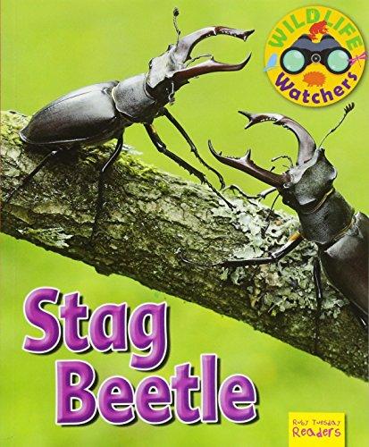 Wildlife Watchers: Stag Beetle By Ruth Owen