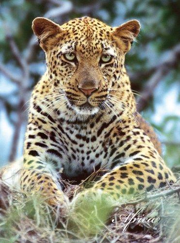 Leopard Journal By Gerald Hoberman
