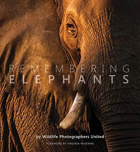 Remembering Elephants By Margot Raggett